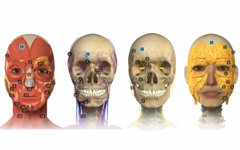 3 Dimensional Facial Anatomy eLearning Course